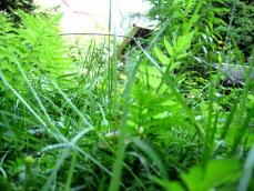 Garten+b